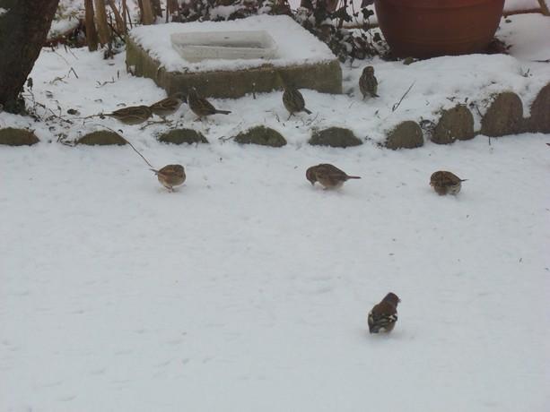 oiseaux d'hiver et oiseaux  divers Dsc01430