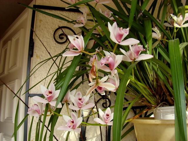 photos fleurs de marie (album 2) Dsc01926