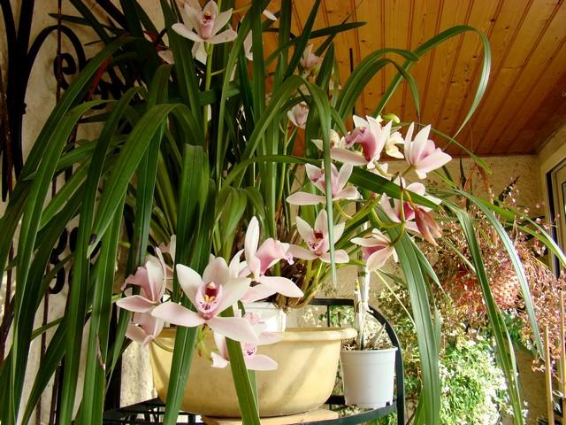 photos fleurs de marie (album 2) Dsc01927