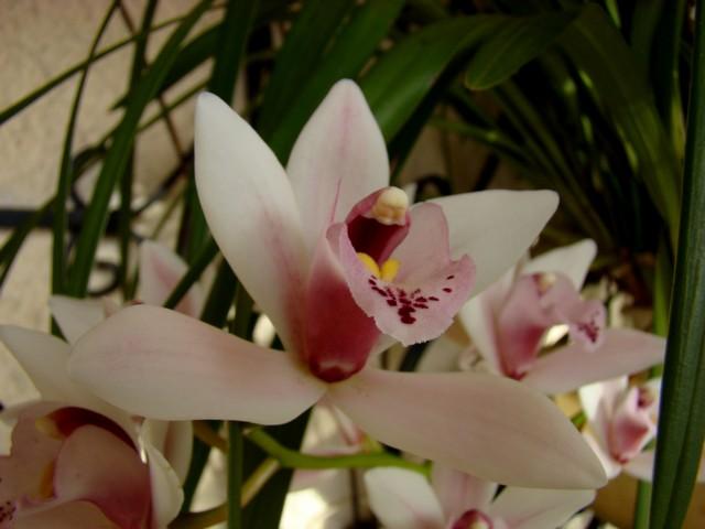 photos fleurs de marie (album 2) Dsc01928