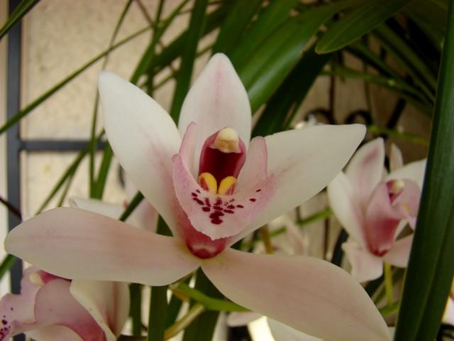 photos fleurs de marie (album 2) Dsc01929