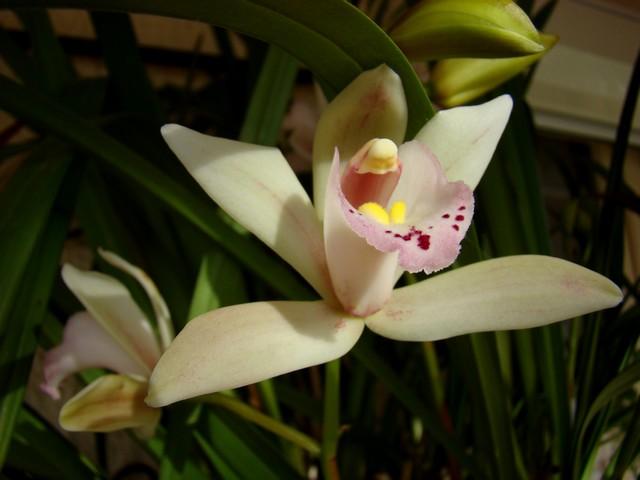 photos fleurs de marie (album 2) Dsc01930