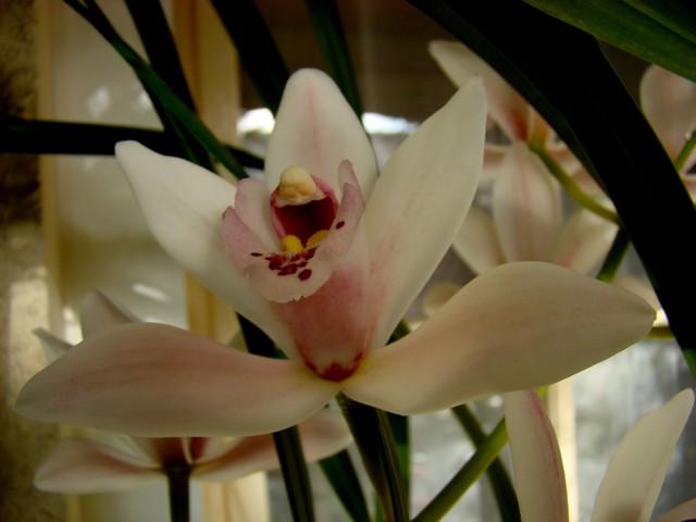 photos fleurs de marie (album 2) Dsc01931