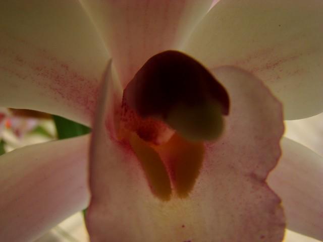 photos fleurs de marie (album 2) Dsc01932