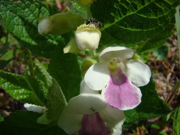 la forêt  et ses fleurs Dsc03320