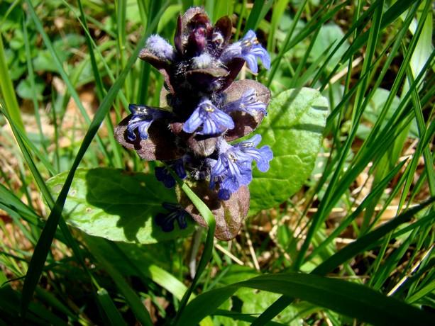 la forêt  et ses fleurs Dsc03322