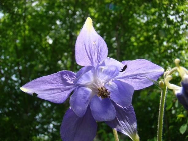 la forêt  et ses fleurs Dsc03323