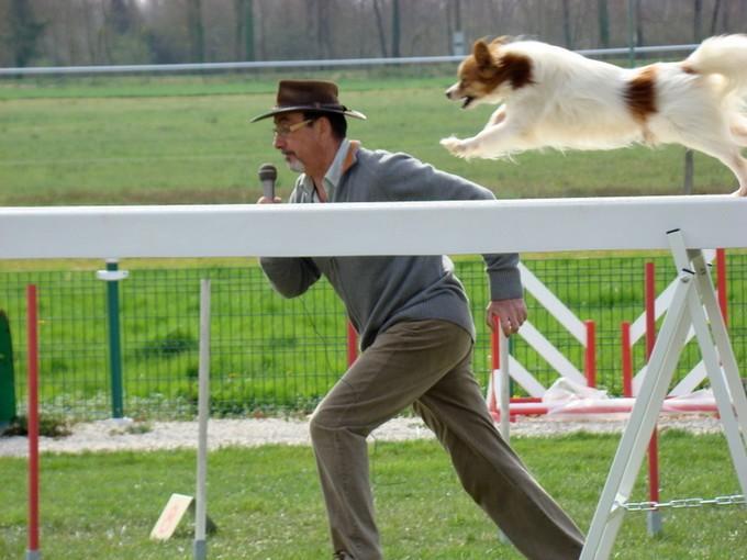 concours d'agility ;montignac ,charente  Dsc05927