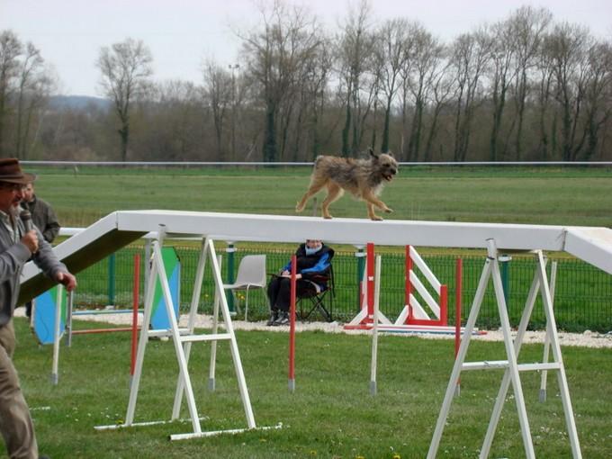 concours d'agility ;montignac ,charente  Dsc06018