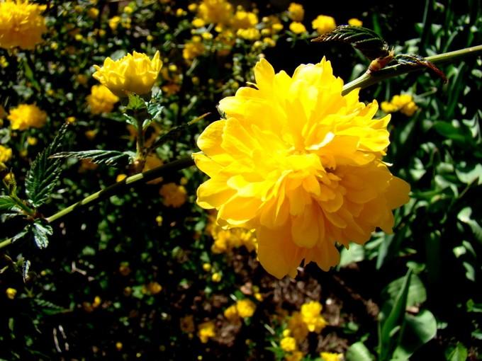 photos fleurs de marie (album 2) Dsc06021
