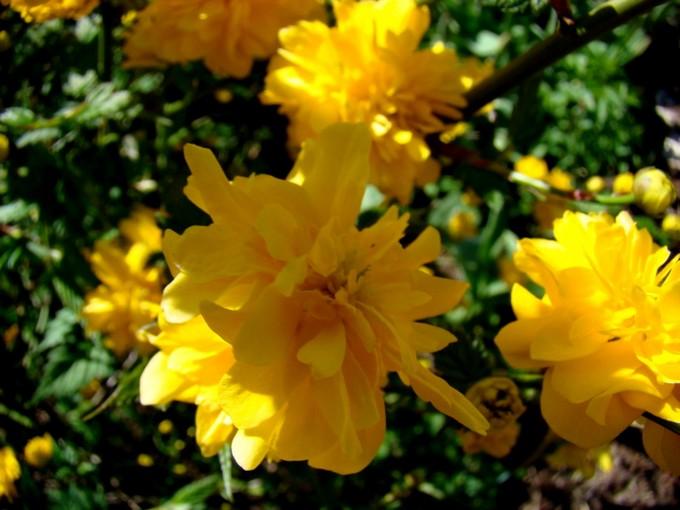 photos fleurs de marie (album 2) Dsc06022