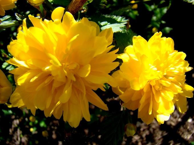 photos fleurs de marie (album 2) Dsc06023