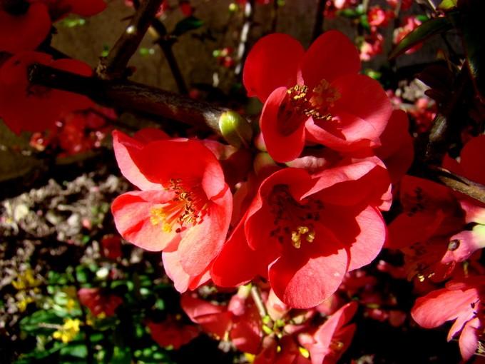 photos fleurs de marie (album 2) Dsc06024