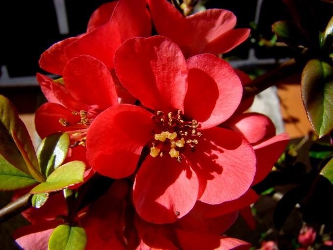 photos fleurs de marie (album 2) Dsc06025