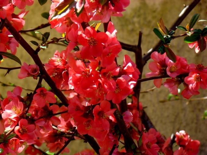 photos fleurs de marie (album 2) Dsc06026