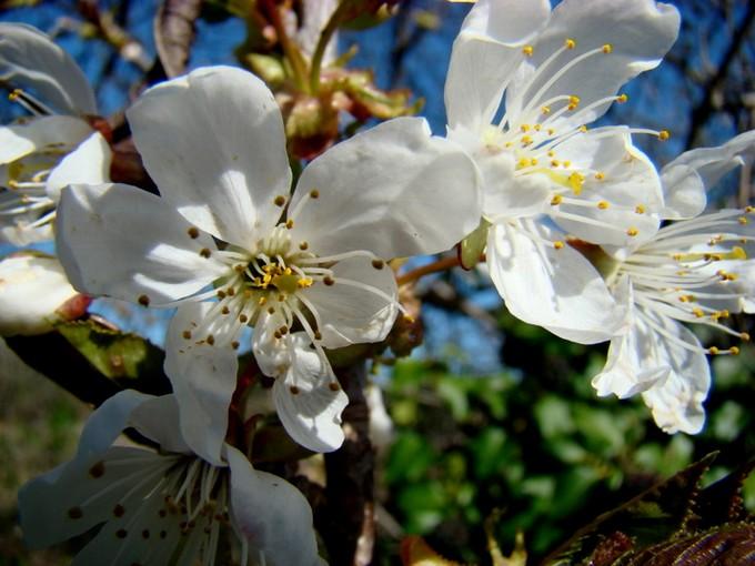 photos fleurs de marie (album 2) Dsc06113