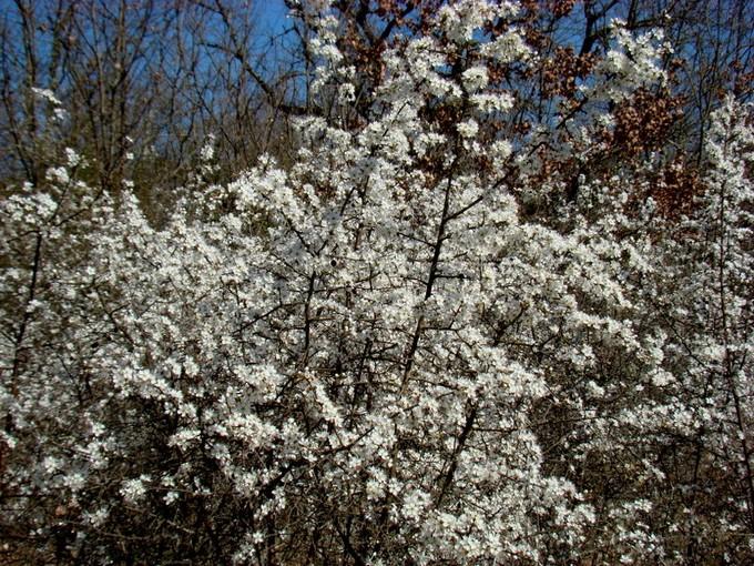 photos fleurs de marie (album 2) Dsc06114