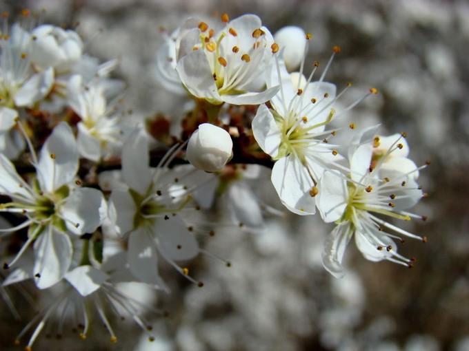 photos fleurs de marie (album 2) Dsc06115
