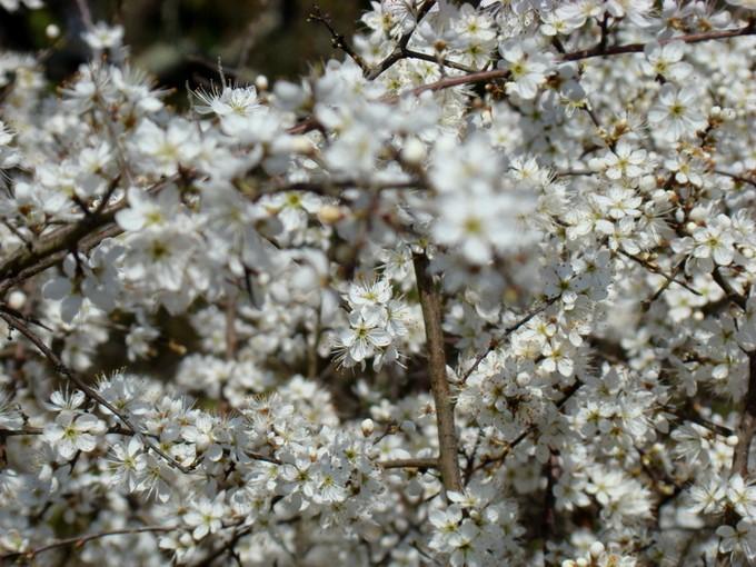 photos fleurs de marie (album 2) Dsc06116