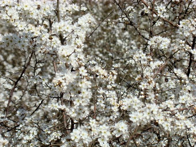 photos fleurs de marie (album 2) Dsc06117
