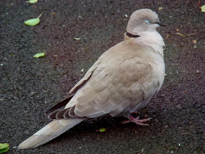 oiseaux de mon jardin 2011 Dsc06123