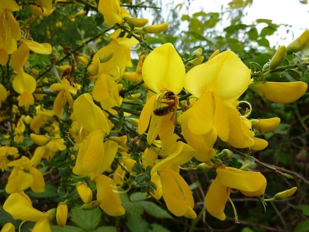 la forêt  et ses fleurs P1000015
