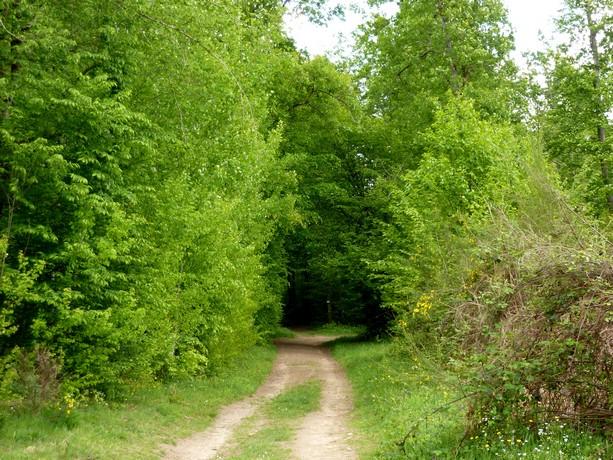 la forêt  et ses fleurs P1000018