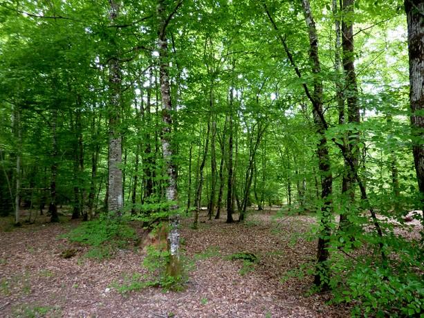 la forêt  et ses fleurs P1000019