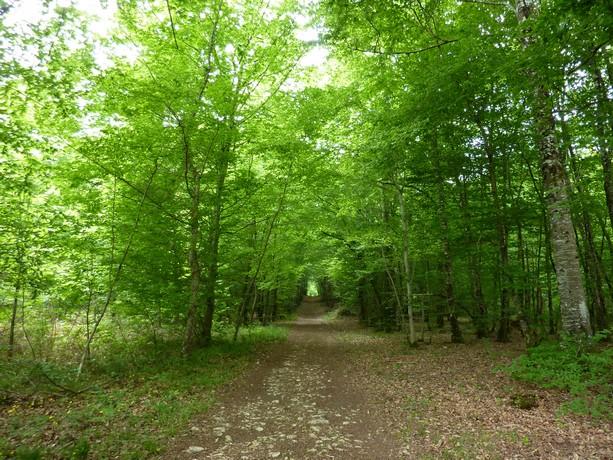 la forêt  et ses fleurs P1000020