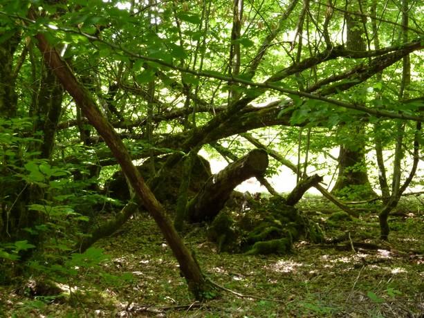 la forêt  et ses fleurs P1000021
