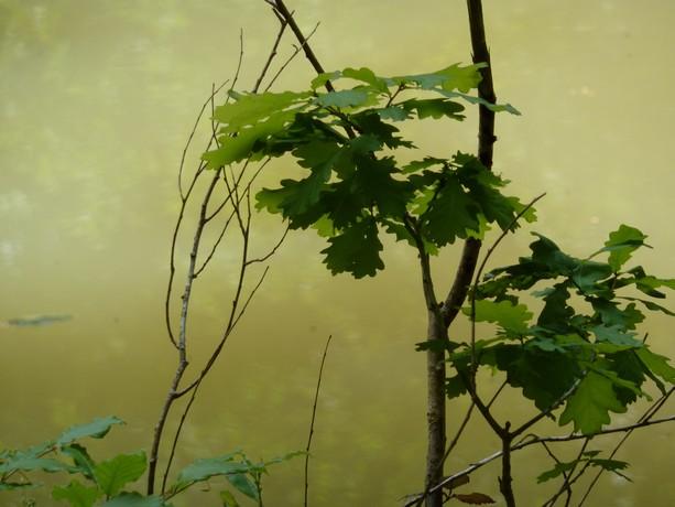 la forêt  et ses fleurs P1000111