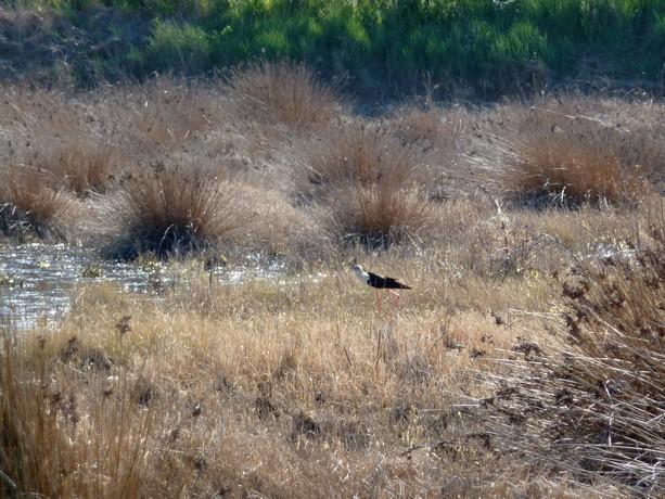 oiseaux d'hiver et oiseaux  divers P1000522
