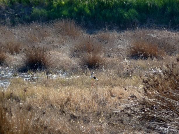 oiseaux d'hiver et oiseaux  divers P1000523