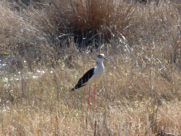 oiseaux d'hiver et oiseaux  divers P1000524