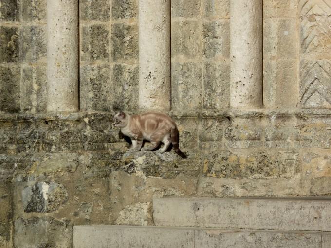 une église et un chat , P1020530