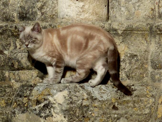 une église et un chat , P1020531