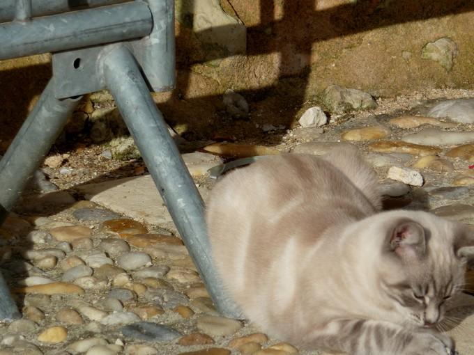 une église et un chat , P1020535