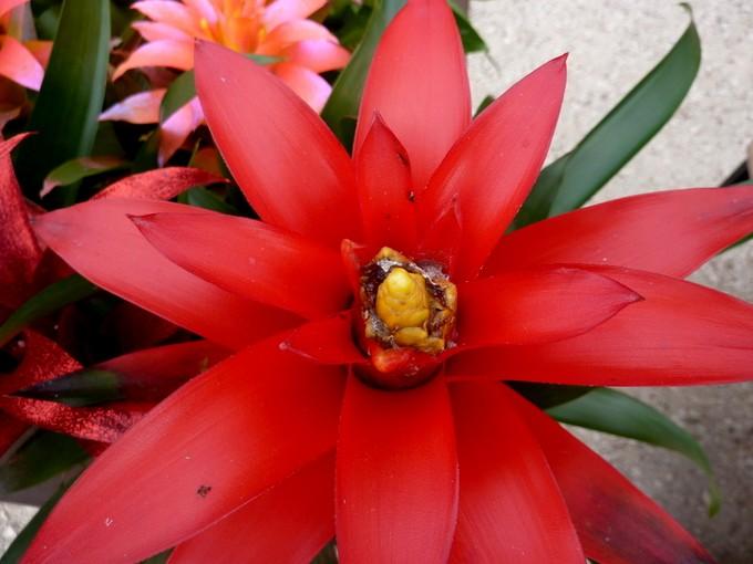 photos fleurs de marie (album 2) P1030710