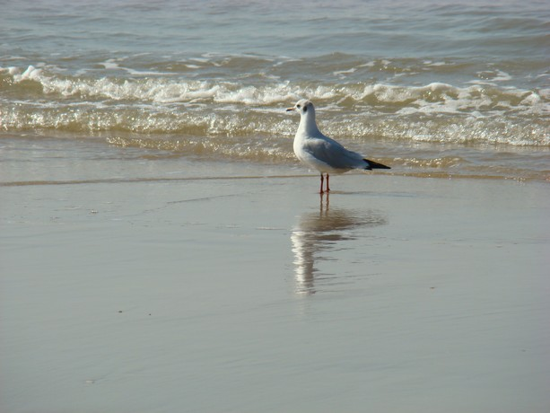 souvenir d'une balade au bord de mer Stpala18