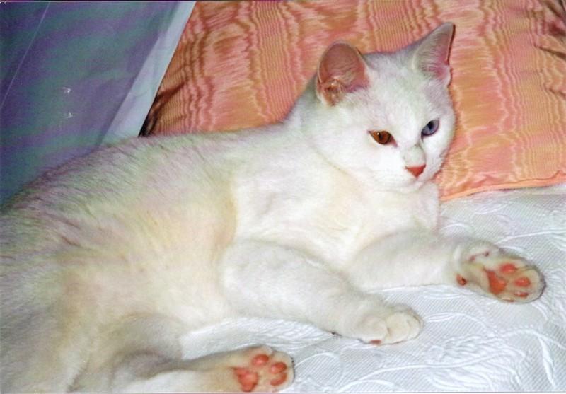 SOS pour un amour de petit chat blanc ! Sos10