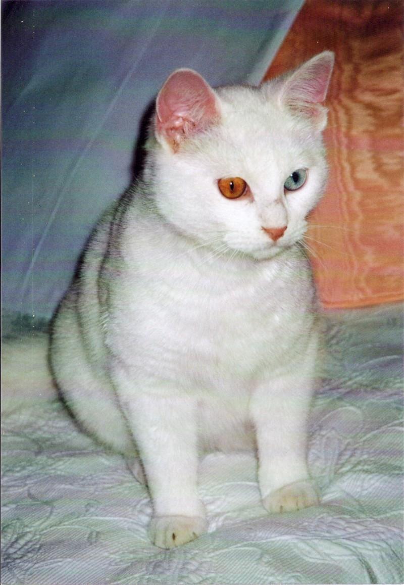 SOS pour un amour de petit chat blanc ! Sos110