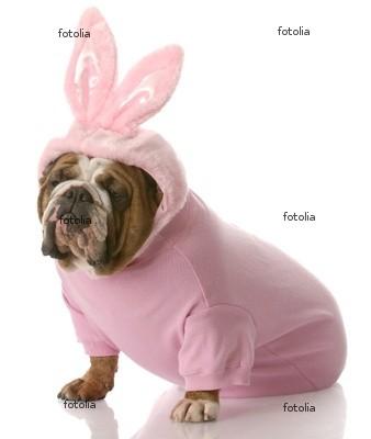 z'avez déjà vu un lapin rose comme ça ????? 400_f_10