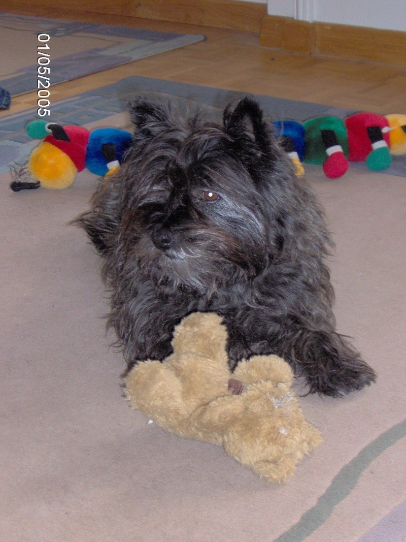 Cookie Cairn terrier Im000014