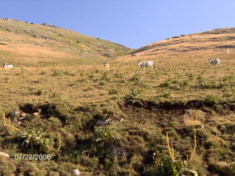 Italia  Grand Sasso Im000213
