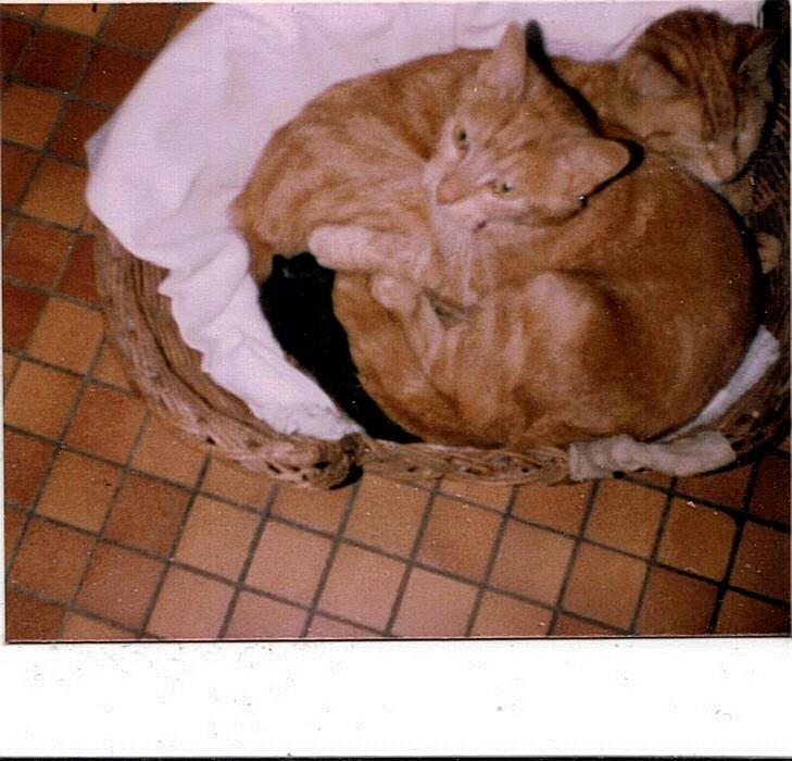 vos animaux de compagnie..(venez voir mon nouveau wouaf) - Page 22 18-05-10