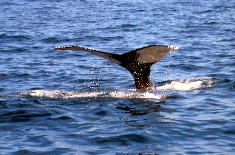 Zoologie... Balein10