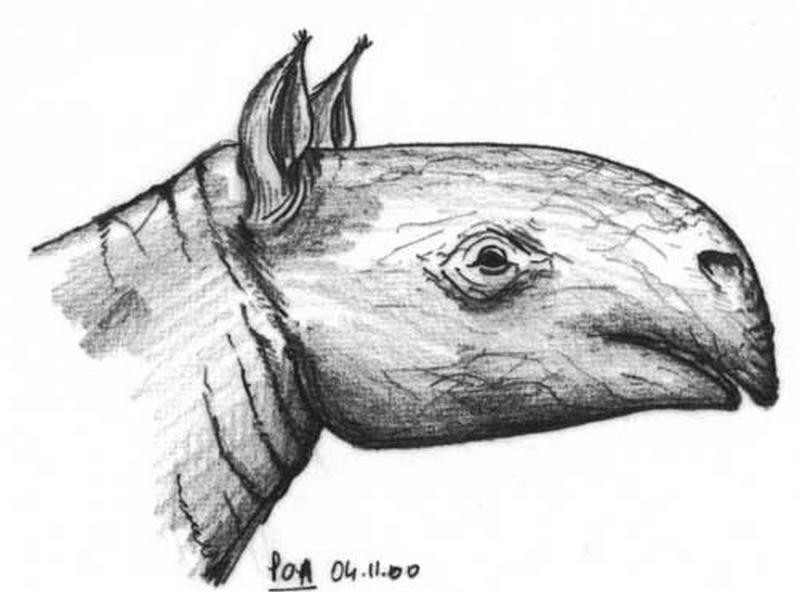 Paleontologie, l'actu... Balu_t10