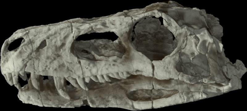 Paleontologie, l'actu... Herrer10
