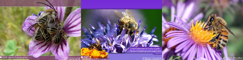 Changement de Saison!!!... Pollen10