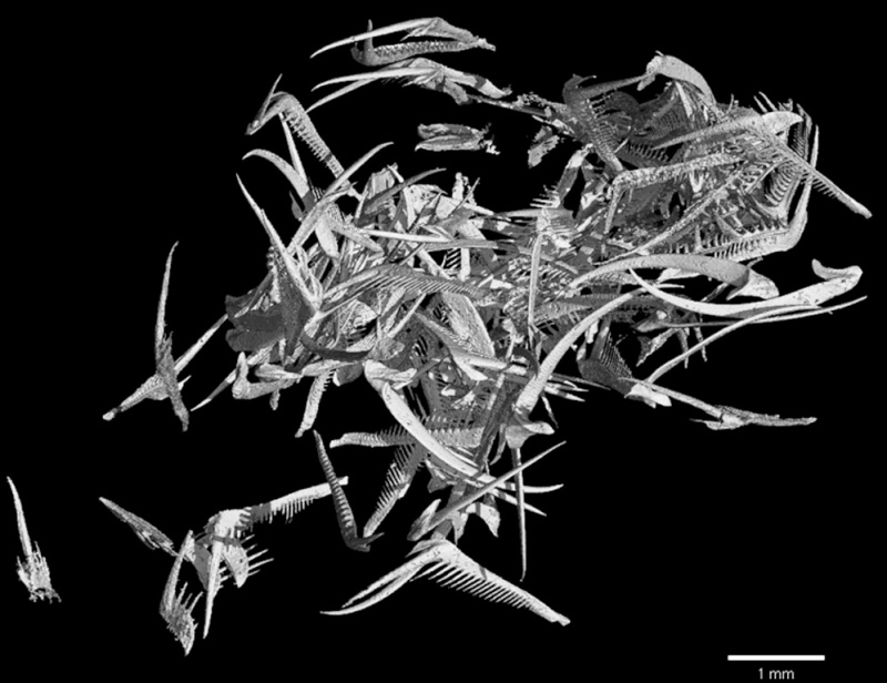 Paleontologie, l'actu... Rtema135